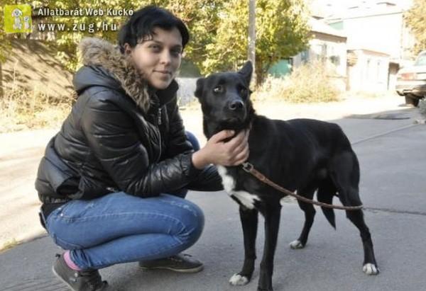 290 kilométert tett meg a kutyus, hogy újra láthassa megmentőjét