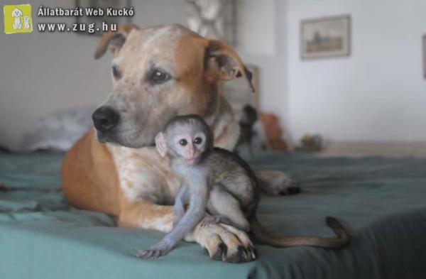 Kutyájukkal együtt járja a világot a házaspár, hogy állatokat mentsenek