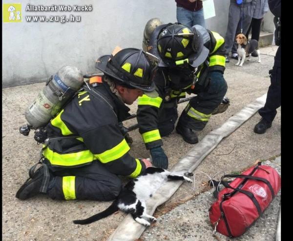 Tűzoltók élesztették újra a füstmérgezéstől elalélt cicust