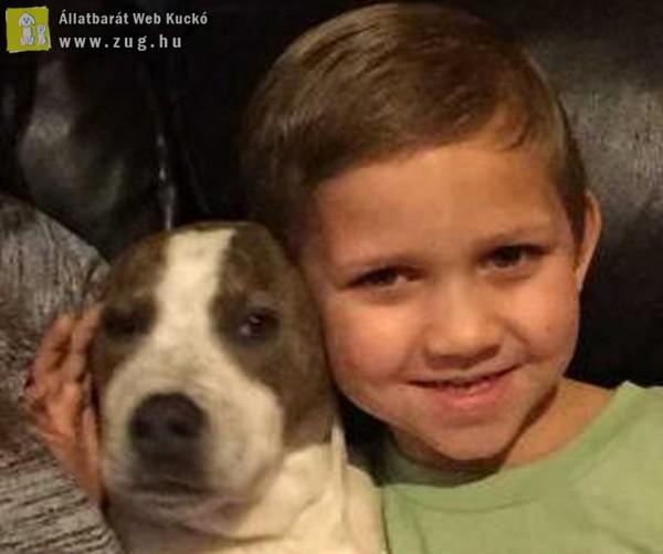 Sírva ölelte magához elveszettnek hitt kutyusát a kisfiú