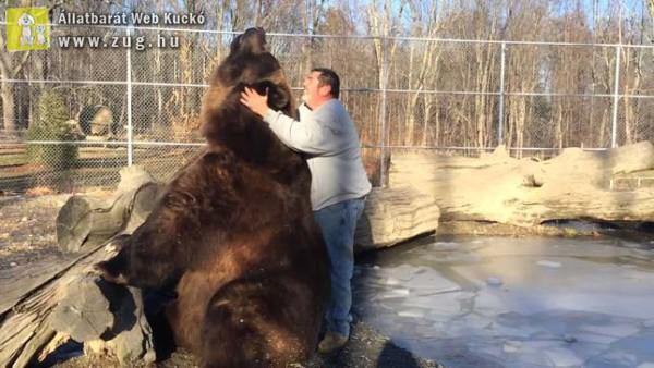 Medve és gondozója különös barátsága