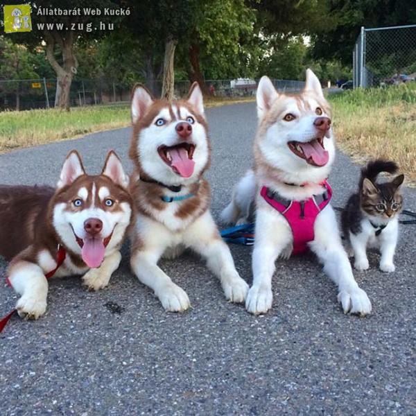 Kutyusok vették gondozásba az árva kiscicát