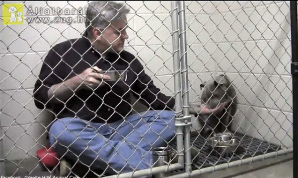 Megható módon vette rá az evésre az orvos a legyengült kutyust