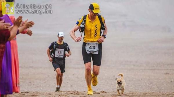 Egy kóbor kutya szegődött a sivatagban a futóhoz