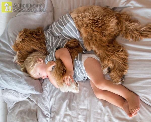 Elválaszthatatlan páros lett a kisfiú és a kutyus