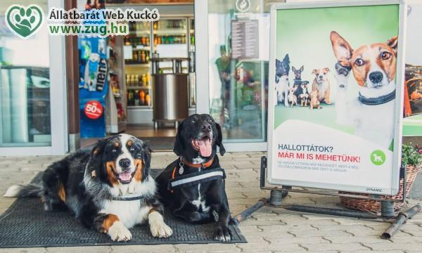 Kutya mikrochip-leolvasós MOL töltőállomások listája - hasznos
