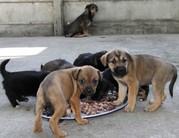 Adó 1% felajánlása Állatvédelemre