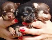 Kutyaszaporítók termelik a kóbor állatokat!