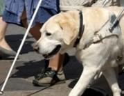 Vakvezető kutyával mindenhova be lehet menni