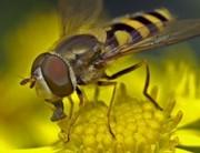 A méhecske az egyik legfontosabb barátunk!