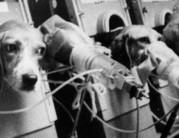 Állatokon tesztelt termékek