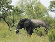 Turisták autóját borította fel egy elefánt