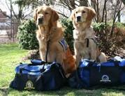 Terápiás kutyák vigasztalják a bostoni túlélőket