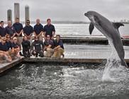 Egy delfin találta meg a 13 éves torpedót