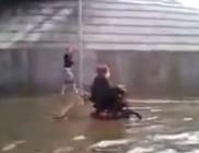 Kutyája mentette meg az árvíztől a mozgássérült férfit