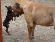 Kettéharapta Növényi Norbert kutyáját egy másik eb