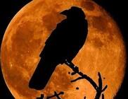 A holdvilág hatással van az állatokra is