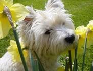 Kutyavilág jön az üdülő kutyákra! Ugatni tilos, a póráz kötelező!
