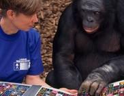 Nyugdíjazzák a kísérleti majmokat