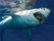Két cápatámadás egymás után