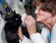 28 éves a világ legidősebb macskája