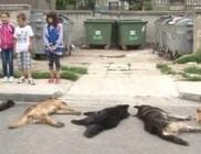 Kóbor kutyák irtása Romániában
