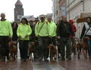 Vizslavíkend: négylábúak kórzóztak a belvárosában