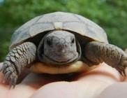 Megtalálták az első idei kis teknősbékát a Vadasparkban