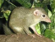 Négy mókuscickánnyal bővült az Állatkert