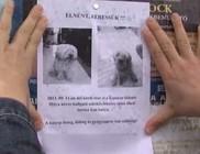 Gyerekek ölték meg a kutyát