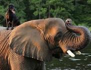 Kutya-elefánt barátság