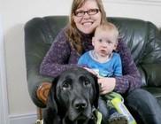 Életet mentett a hős vakvezető kutya