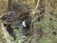 Kutyák és a sofőr is meghaltak az autóbalesetben