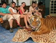 Hét tigrissel él együtt egy család