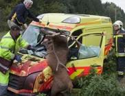 Állatok okozta balesetek veszélye a közúton