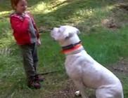 Gyerekre támadt egy argentin dog