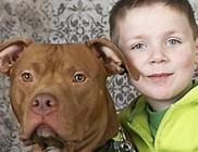 Négyéves kisfiú életét mentette meg egy pitbull