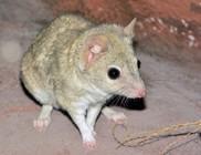 Két új, ritka fajjal bővült a fővárosi állatkert