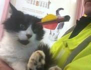 Egy nyíl fúródott a macska fejébe