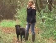 Séta közben lőtték ki mellőle a kutyáját