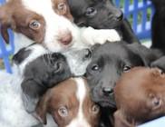 Az Orpheus Állatvédő Egyesület támogatói évente 7-800 állat megmentésében segédkeznek