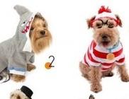 Most akkor csináljunk bohócot a kutyánkból vagy ne?!