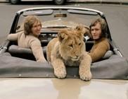 Az oroszlán és az őt felnevelő emberek találkozása egy év után