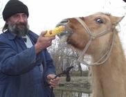 Rendőrök fogták be a szökevény lovat