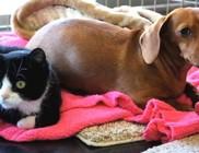 Kutya ápolja a lebénult macskát