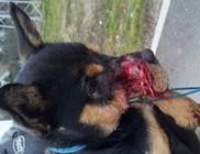 Brutális állatkínzás Hódmezővásárhelyen - durva fotók!