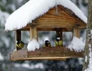 Magyarországon telelő madarak