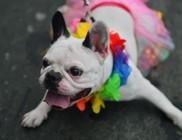 Állatok karneválja Rioban