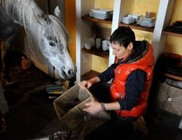 Nem hajlandó visszaköltözni a házból az istállóba a félős ló