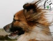 A kutya az emberekhez hasonlóan érzékeli a hangokban rejlő érzelmeket